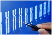 Изображение №3: Генетический скрининг - ЭКО-блог
