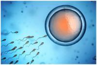 Изображение №2: Как стать донором яйцеклетки - ЭКО-блог