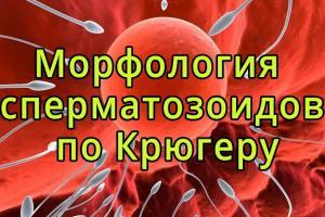 Изображение №0: Морфология сперматозоидов по Крюгеру - ЭКО-блог