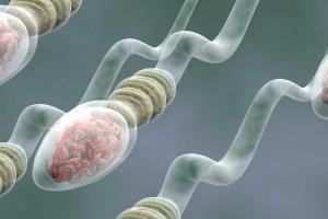 Изображение №2: Как улучшить качество спермы - ЭКО-блог