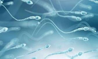 Изображение №1: Инсеминация спермой донора - ЭКО-блог