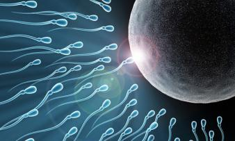 Изображение №2: От чего она зависит и как улучшить мужскую фертильность? - ЭКО-блог