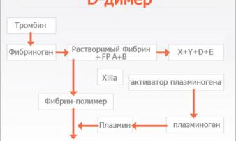 Изображение №1: Д димер при беременности - ЭКО-блог
