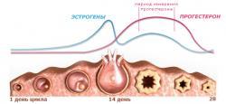 Изображение №1: Роль прогестерона в успешности зачатия - ЭКО-блог