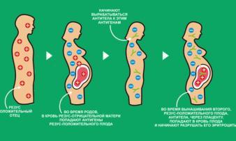 Изображение №2: Резус конфликт при беременности - ЭКО-блог