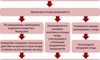 Изображение №5: Резус конфликт при беременности - ЭКО-блог