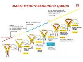 Изображение №1: Цервикальный фактор бесплодия - ЭКО-блог