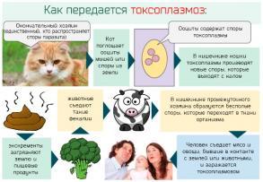 Изображение №1: Токсоплазмоз igg при беременности - ЭКО-блог