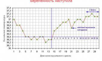 Изображение №4: Базальная температура при беременности - ЭКО-блог
