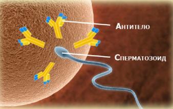 Изображение №0: Иммунологическое бесплодие - ЭКО-блог