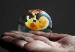Изображение №2: Размер плода по неделям беременности - ЭКО-блог