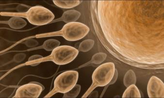 Изображение №0: Лечение бесплодия: патологии спермы - ЭКО-блог