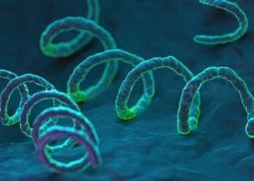Инфекции, которые мешают забеременеть - ЭКО-блог