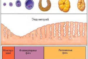 Изображение №1: Симптомы овуляции - ЭКО-блог