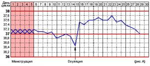 Изображение №2: Симптомы овуляции - ЭКО-блог