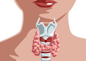 Влияние щитовидной железы на течение беременности - ЭКО-блог