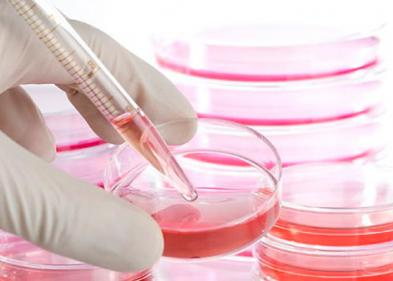 Стволовые клетки и их значение в современной медицине (часть 1) - ЭКО-блог