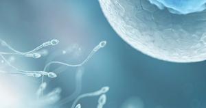 Изображение №0: Как оценивают качество сперматозоидов на молекулярном уровне - ЭКО-блог