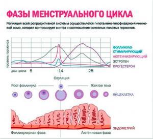 Изображение №0: Можно ли забеременеть сразу после месячных - ЭКО-блог