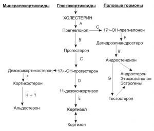 Изображение №1: 17-ОН прогестерон повышен у женщины - ЭКО-блог