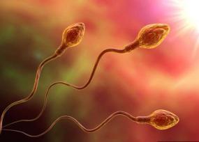 Созревание сперматозоидов и оплодотворение - ЭКО-блог