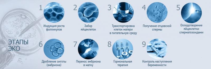 Изображение №2: Вспомогательные репродуктивные технологии в лечении мужского бесплодия - ЭКО-блог