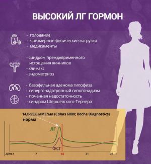 Изображение №1: Соотношение ЛГ и ФСГ - ЭКО-блог