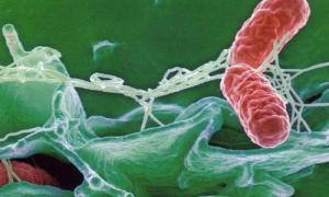Изображение №0: Уреаплазменная инфекция при планировании беременности: что нужно знать! - ЭКО-блог