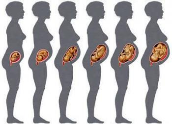 Изображение №0: Вес плода по неделям беременности: таблица - ЭКО-блог