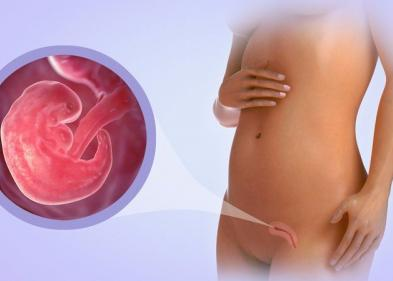Вес плода по неделям беременности: таблица - ЭКО-блог