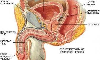 Изображение 2: Воспаление яичка - ЭКО-блог