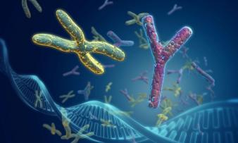 Изображение 1: Синдром Шерешевского-Тернера - ЭКО-блог