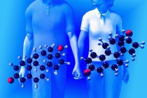 Изображение №3: Половые гормоны человека, виды гармонов - ЭКО-блог