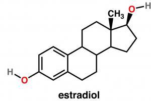 Изображение №1: Половые гормоны человека, виды гармонов - ЭКО-блог