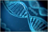 Изображение №0: Фрагментация ДНК - ЭКО-блог