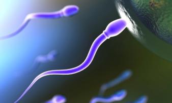 Изображение 3: Олигоспермия - ЭКО-блог