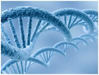 Изображение №1: Генетические исследования и анализы - ЭКО-блог