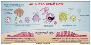 Изображение №2: Задержка месячных - причины - ЭКО-блог