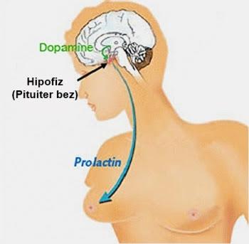 Симптоматика и лечение гиперпролактинемии у женщины