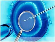 В чем отличие сперматозоидов от спермиев  Школьные Знанияcom