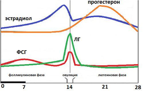 Соотношение ЛГ и ФСГ, норма, соотношение гормонов при климаксе и ...